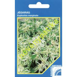 Jégvirág - Euphorbia