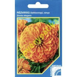 Rézvirág - Zinnia Dahlia virágú Sárga